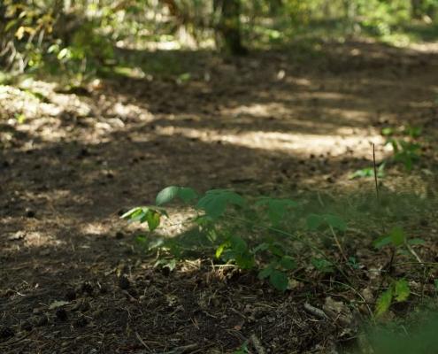 Hemelbrug zoektocht in het bos
