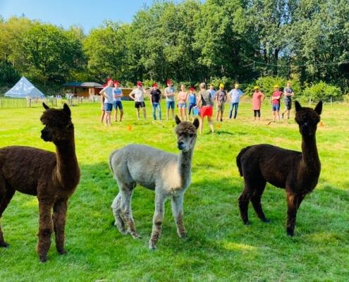 alpaca outdoor fun vergaderen limburg beringen